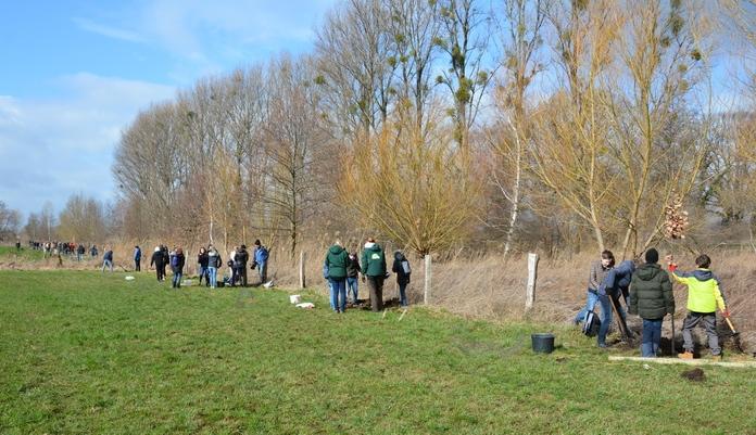 Die Stadtwerke Soest und ihre Partner pflanzen 31 neue Bäume.